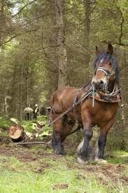 horse logging - Google Search
