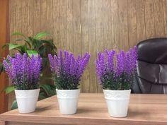5 Plantas para colocar no seu quarto que ajudam a dormir melhor e descansar - GosteiSalvei Sweet Home, Rose, Health, Plants, Lawn Ornaments, Decorative Garden Fencing, Gardening Tips, About Plants, Plant Decor