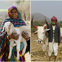 Goat herders and agrarian life in the countryside of Udaipur. | Traveling Through India (With Kids!)