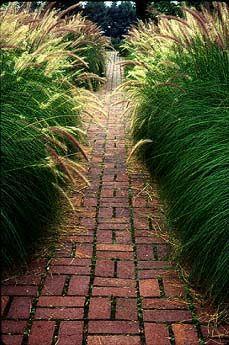 Pennisetum alopecuroides ornamental fountain grass and brick pathway; Garden Stock Photography / judywhite