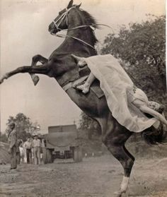 17 Vintage Photos of Circus Horses & Big Top Beauties Vintage Cowgirl, Vintage Horse, Vintage Circus, Horse Pictures, Old Pictures, Old Photos, Horse Girl, Horse Love, Trick Riding
