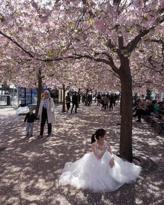 Photo by @nickcobbing. Kirsty is from Taiwan on holiday with her husband Oswin. Married a few months back they bring the wedding dress for a photo shoot under the canopy of Stockholm's Japanese cherry trees. The avenue of Japanese sakura trees in Kungsträdgården attracts crowds during the brief but dramatic flowering. The sight on its own is incredible enough but stroll around here long enough and something interesting will happen amidst the falling petals. by natgeo