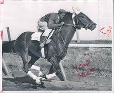 Iron Liege who defeated Gallant Man in the 1957 Kentucky derby when jockey Bill Shoemaker misjudged the finish line