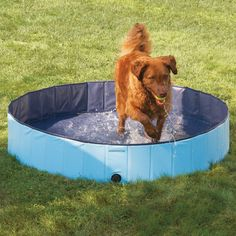 The Canine Splash Pool - Hammacher Schlemmer.  I know this is for the pups but I would use this for my nephews too...especially since I don't have to blow it up!