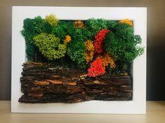 Мох Moss Decor, Growing Moss, Moss Plant, Moss Wall Art, Tin Can Crafts, Moss Garden, Green Art, Diy Planters, Plant Wall