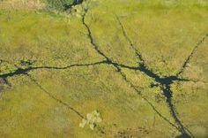 wetland lines
