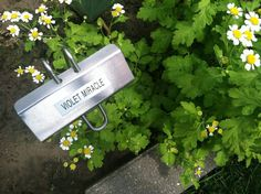 Plant Markers, Garden Markers, Identify Plant, Garden Labels, Herbs, Plants, Brother, Herb, Flora