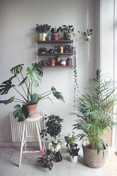 Houseplant hoarding inspiration via Door Sixteen.
