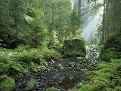 Forest in České Švýcarsko. Go Hawaii, Forest Fairy, Czech Republic, Beatles, Fairy Tales, Waterfall, Explore, Pictures, Outdoor