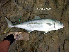 Kingfish Off The Rocks I