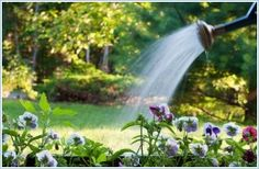 Locsoljunk okosan! Végre megérkezett a várva- várt nyár! A kánikulában, szárazság idején kertünk növényei is bőséges víz után szomjaznak. Ha szeretnénk, hogy kertünk üde és zöld oázis legyen az év legmelegebb hónapjaiban is, s a virágok ne kókadozzanak, hűsítésükről illetve a magas fokú párolgás miatt a kellő vízpótlásról gondoskodnunk kell.  Olvass tovább: http://www.tarka-hirek.hu/kiskert/locsoljunk-okosan-/
