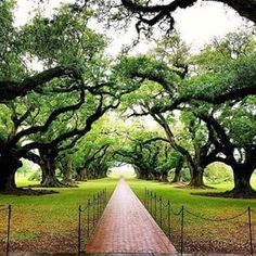 Hello, green. Social media manager Emily Davis jetted off to Louisiana and picnicked beneath 300 year old oak trees at Oak Alley Plantation.