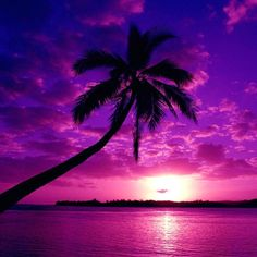A brilliant purple sky during sunset. This pic is beautiful! Purple Sunset, Purple Love, Purple Beach, Purple Things, Pink Purple, Pink Ocean, Purple Colors, Ocean Sunset, Sunset Colors