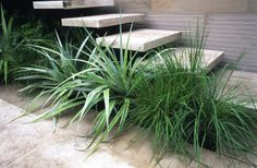 2006 RHS Chelsea Flower Show, Andy Sturgeon, Floating steps Chelsea London, Garden Steps, Modern Garden Design, Chelsea Flower Show, Tropical Paradise, Water Features, Landscape Architecture, Garden Landscaping, Interior And Exterior