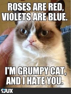 I'm Grumpy Cat and I approve this message.