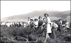 Secondary school pupils from Gore in Southland in 1942 pulling flax Food Rations, Land Girls, Secondary School, World War, New Zealand, Wwii, Growing Up, Middle School, World War Ii