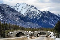 One of the many cool things about Banff National Park is the animal bridges! These bridges were built solely for the purpose of helping animals cross the highway. As you can see, the top looks like a forest! Banff National Park, National Parks, Newfoundland, Bridges, Mount Everest, Purpose, Canada, Mountains, Cool Stuff