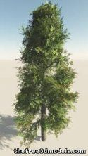 Broad Leaf Straight Trunk Tree - 3d model - .3ds, .obj, .3dm