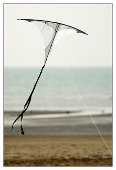 An interesting designer kite that reveals more the closer you look. Called the 'Manta', it could be considered a variation on the simple Diamond kite. Albeit with an extremely wide nose angle! Perhaps it is even closer to the Diamond Stunt kite since it has a leading edge spar rather than a cross-spar. T.P. (my-best-kite.com)