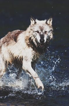 Look at me ... I can walk on the water surface , and I'm awesome u-u ... *falls* Oh ... guess not ...