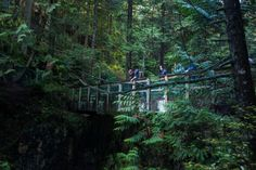 One of the most beautiful places in the Lynn Canyon Park is the Lynn Valley Pipe Bridge.