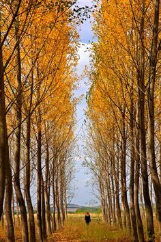12 Reasons to Visit Italy in the Fall|Pinterest: theculturetrip