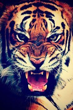Königstiger Bengalischer Tiger Mauspad aus der Edition Colibri