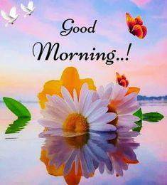 Beautiful Morning Pictures, Nice Good Morning Images, Good Morning Cards, Hindi Good Morning Quotes, Good Morning Funny, Good Morning Picture, Good Morning Flowers, Good Night Greetings, Morning Greetings Quotes
