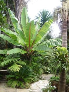 Looking for a popular Common Tropical Houseplants to grow in your house? Our guide will help you to choose the plants that attractiveness to your home. Palm Garden, Tropical Garden Design, Tropical Backyard, Tropical Landscaping, Tropical Plants, Tropical Flowers, Dream Garden, Backyard Landscaping, Colorful Flowers