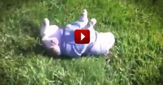 How This Pup Gets Around Is Something I've NEVER Seen Before. And It's Completely Adorable!