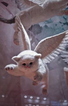 Eaton's Centre, Christmas 2010 window display for Artizia: angelic kittens