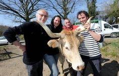 La renaissance de la vache béarnaise | La Vallée d'Aspe Par Les Fontaines d'Escot | Scoop.it