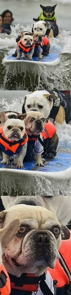 This surfing dog. http://www.buzzfeed.com/daves4/animals-that-have-made-a-huge-mistake#