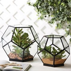 Show off your favorite succulents with these stylish pair of geodesic terrariums. Crafted from glass and brass, they're ideal for having a little patch of desert around your home.