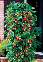 How to Select Healthy Fruit Trees and Berry Bushes for Your Fruit Garden