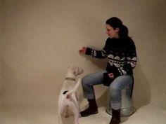 21 Spiele zur Festigung der Hund-Mensch Bindung mit Hund/Entlebucher Sennenhund Lucy Hundetraining - YouTube