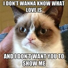 grumpy cat, what is love, show me