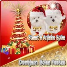 Happy Holidays  #spikebichon #christmas