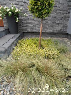 Geometryczny...marzenie pięknego ogrodu! - strona 599 - Forum ogrodnicze - Ogrodowisko