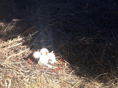 En la primera expedición encontramos huevos