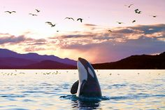 Beautiful Whale on Vancouver Island
