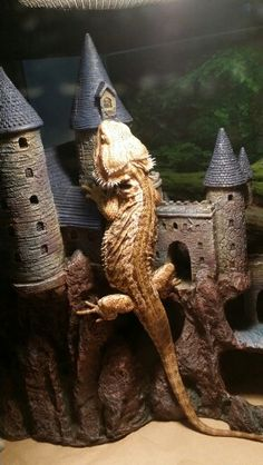 Dragon storming the castle! Dragon storming the castle! Bearded Dragon Habitat, Bearded Dragon Cage, Bearded Dragon Funny, Bearded Dragon Enclosure, Les Reptiles, Cute Reptiles, Reptiles And Amphibians, Animals And Pets, Baby Animals