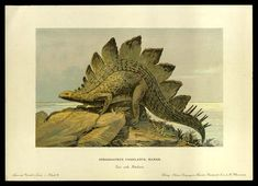 Stegosaurus - Early Prehistoric Animal and Dinosaur Pictures