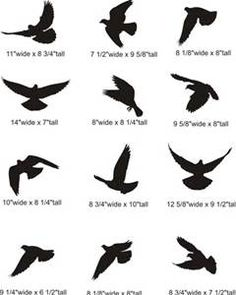flying bird tattoos - - Yahoo Image Search Results