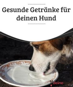 Healthy drinks for your dog - your animals - Healthy Drinks for Your Dog You can promote your dog& health by giving him healthy drinks tha - Pumpkin Recipes For Dogs, Dog Food Recipes, Dog Popsicles, Gin Drink Recipes, Food Dog, Havanese Puppies, Shih Tzu, Healthy Drinks, Dog Love