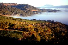 Napa Valley sun and fog aerial #NapaValleyHoliday