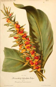 bd. 17, 1873 - Illustrierte Garten-Zeitung. - Biodiversity Heritage Library