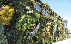 ¿No es genial este jardín vertical en Ibiza por el diseñador Patrick Blanc
