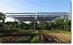Japanese Farmers Producing Crops and Solar Energy Simultaneously