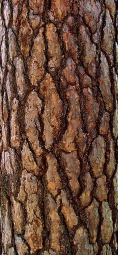 This is the texture of a tree and could be used to show the Pohutakawa Tree bark. This is the texture of a tree and could be used to show the Pohutakawa Tree bark – paint cardboar Natural Forms, Natural Texture, Patterns In Nature, Textures Patterns, Nature Pattern, Different Tones, Interior Paint Colors, Interior Painting, Blender 3d